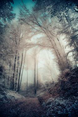 David Keochkerian EMPTY COUNTRY PATH WITH TALL TREES
