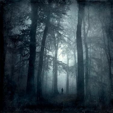 Dirk Wustenhagen Deciduous forest on a misty autumn morning - textured photography