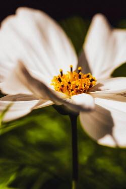Sally Mundy Close up of white flower