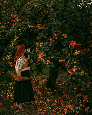 Rebecca Stice WOMAN WITH RED HAIR PICKING APPLES