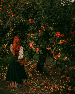 Rebecca Stice WOMAN WITH RED HAIR AND BASKET BY APPLE TREE