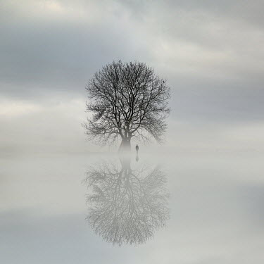 Felicia Simion Man standing under tree by lake under fog