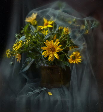 Andreeva Svoboda Yellow flowers in vase under sheer sheet