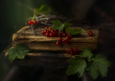 Andreeva Svoboda Berries on wood