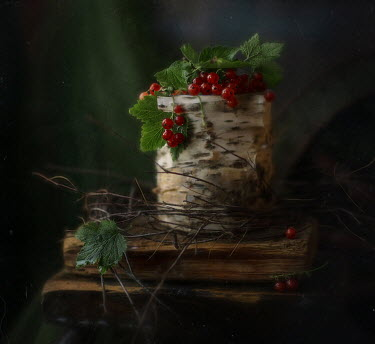 Andreeva Svoboda Berries on log and wood
