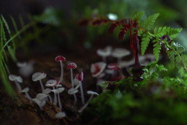 Andreeva Svoboda Mushrooms and leaves