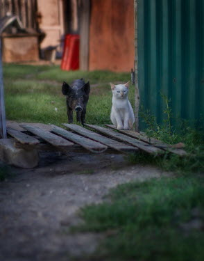 Andreeva Svoboda Piglet and cat by palette