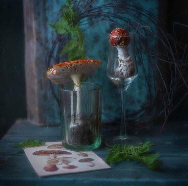 Andreeva Svoboda Mushrooms in glasses