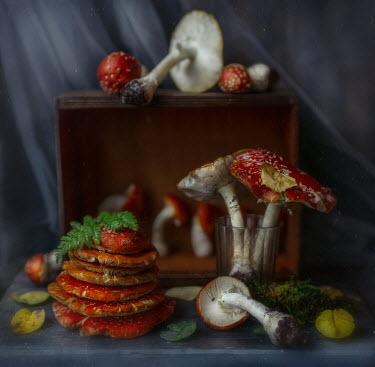 Andreeva Svoboda Mushrooms and wooden box