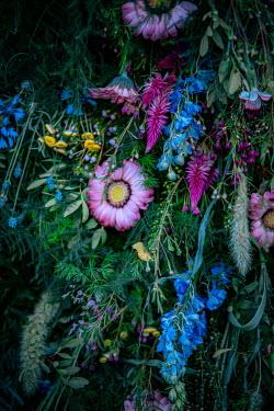 Magdalena Wasiczek Variety of flowers