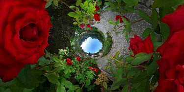 ILINA SIMEONOVA Little world flowers in garden