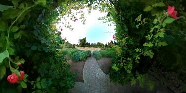 ILINA SIMEONOVA Bush in garden