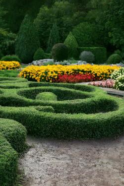 ILINA SIMEONOVA Hedges in garden