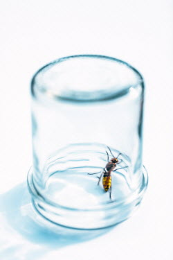 Magdalena Russocka close up of hornet trapped in jar