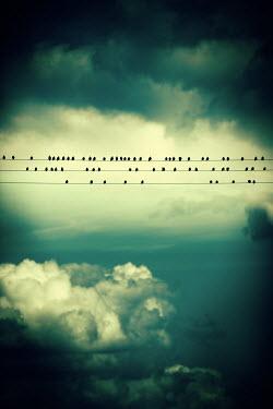Magdalena Russocka flock of birds sitting on power lines