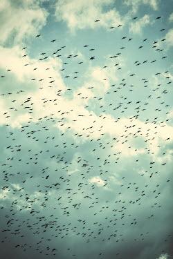 Magdalena Russocka large flock of birds flying against sky