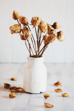 Stephanie Frey DRIED FLOWERS IN WHITE VASE ON TABLE