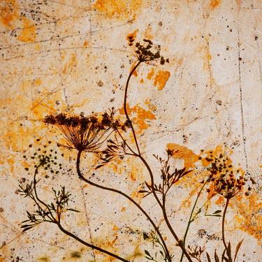 Liz Dalziel SILHOUETTED DRIED FLOWERS ON ORANGE TEXTURE
