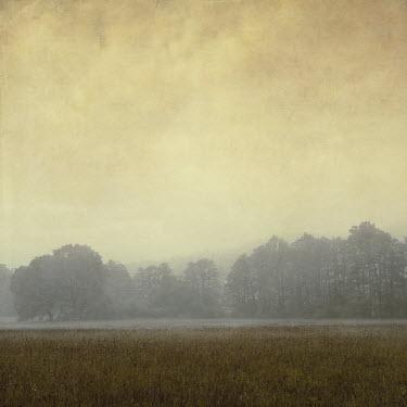 Dirk Wustenhagen MISTY FIELD AND TREES