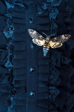Jaroslaw Blaminsky MOTH ON BLACK LACE BLOUSE