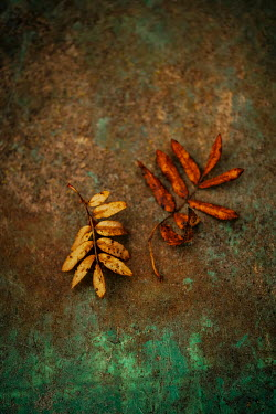 Sally Mundy AUTUMN LEAVES ON RUSTY GREEN METAL