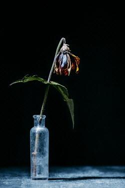 Magdalena Russocka withering flower in vase