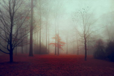 Dirk Wustenhagen TREES IN FOG WITH AUTUMN LEAVES