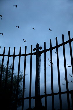 Miguel Sobreira Fence Against Sky With Birds