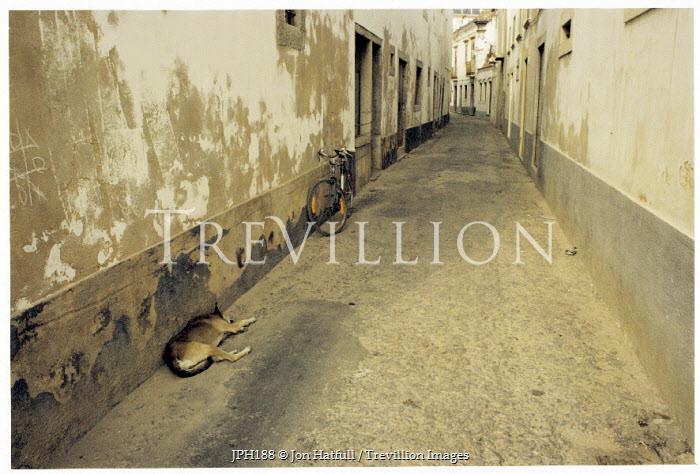 Jon Hatfull DOGS SLEEPING IN ALLEYWAY Streets/Alleys