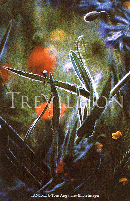Tom Ang Flowers/Plants
