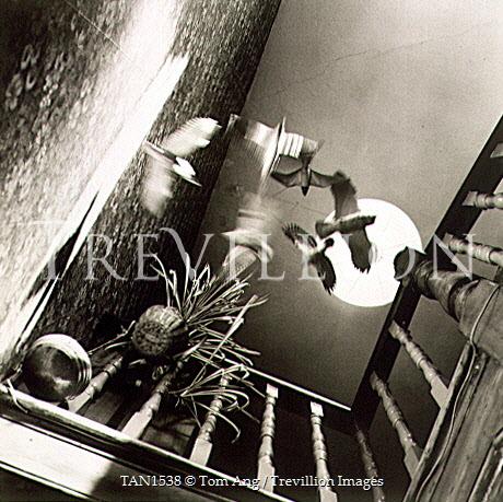 Tom Ang Interiors/Rooms