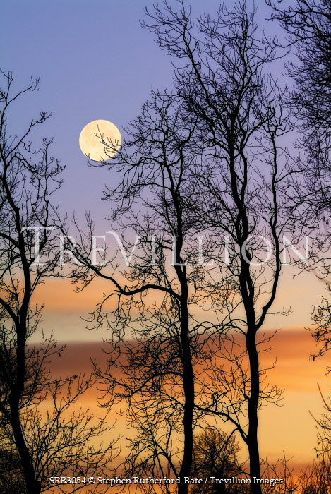 Stephen Rutherford-Bate moon over trees at dusk Trees/Forest