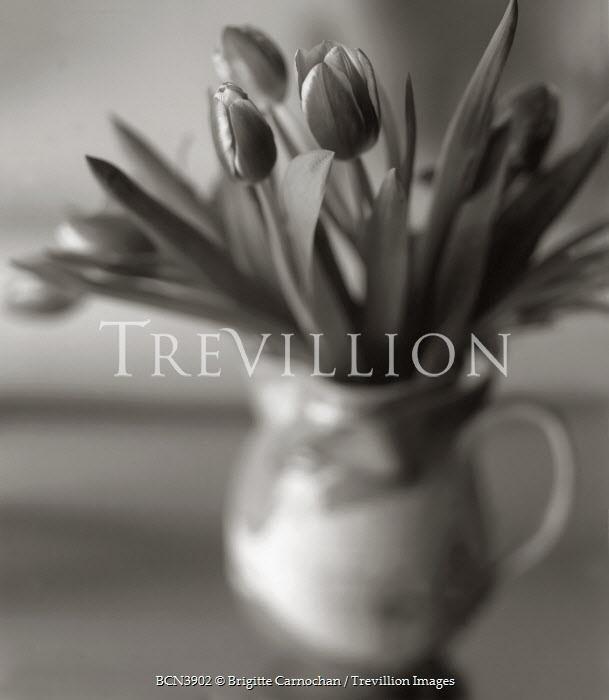 Brigitte Carnochan TULIPS IN VASE Flowers/Plants