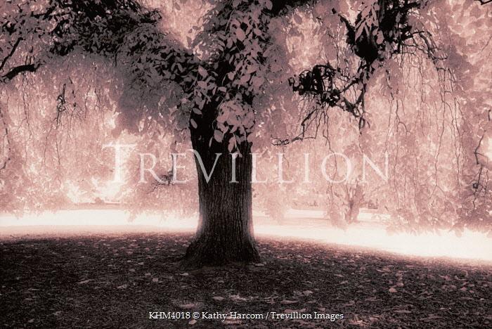 Kathy Harcom LARGE TREE Trees/Forest