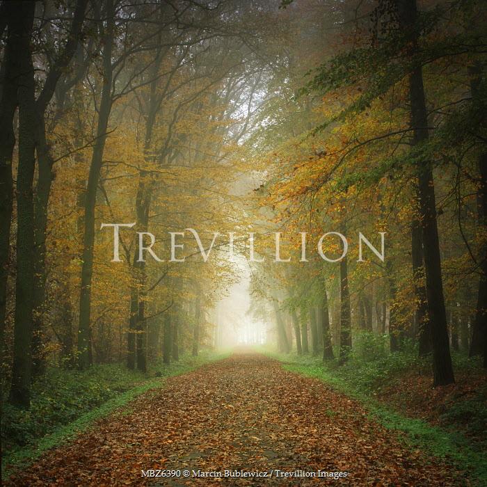 Marcin Bublewicz AUTUMNAL FOREST PATH Paths/Tracks