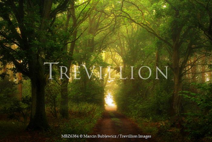 Marcin Bublewicz PATH THROUGH FOREST Paths/Tracks