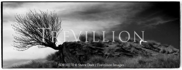 Steve Deer Trees/Forest