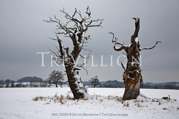 David Henderson SNOWY TREES IN FIELD Trees/Forest