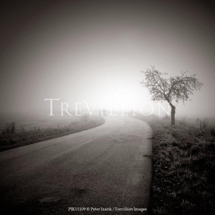 Peter Izarik Paths/Tracks
