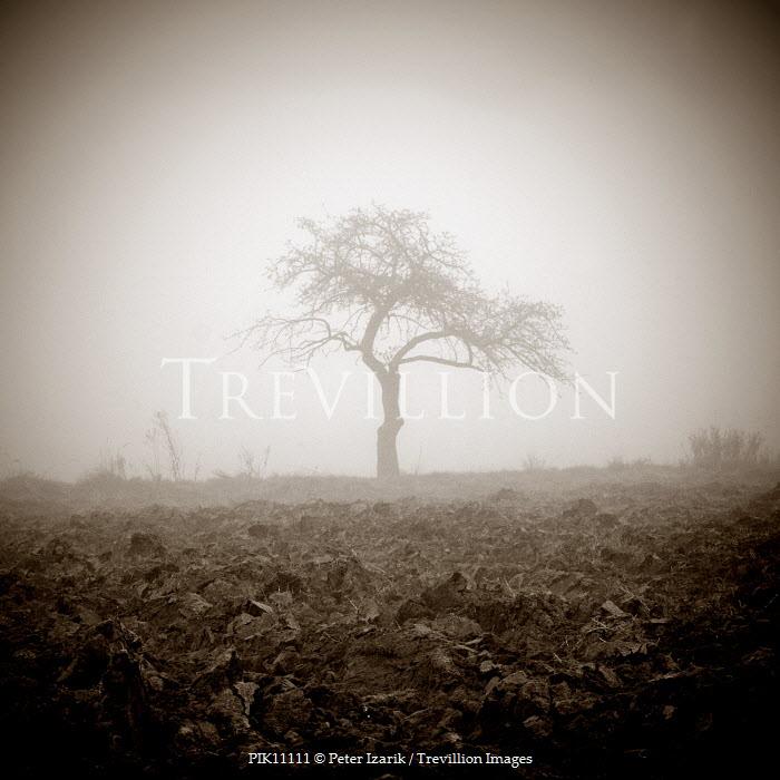 Peter Izarik Trees/Forest