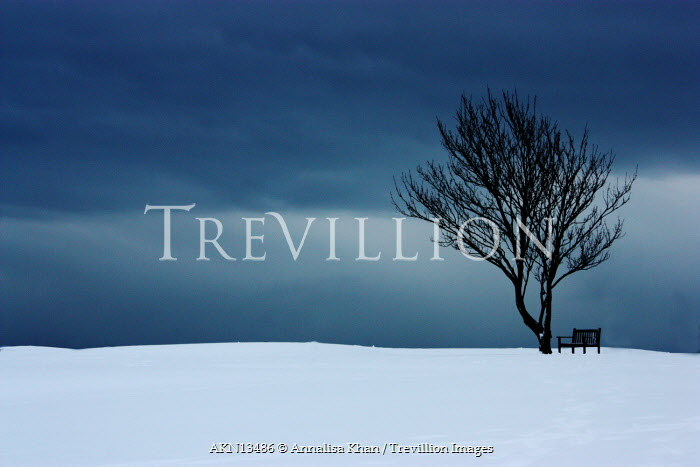 Annalisa Khan BENCH BY TREE IN FIELD WITH SNOW Trees/Forest