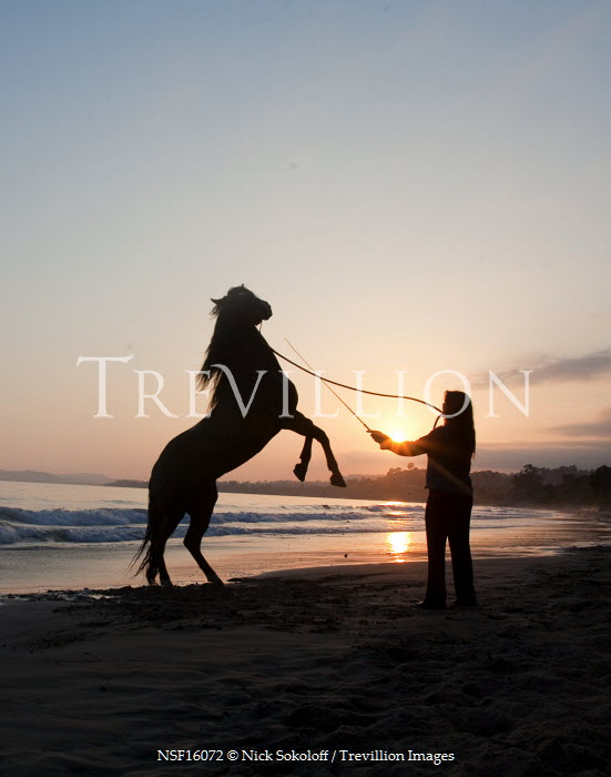 Nick Sokoloff SILHOUETTE OF WOMAN AND HORSE ON BEACH Women