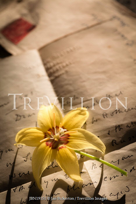Jan Bickerton OLD OPENED LETTER WITH FLOWER Miscellaneous Objects