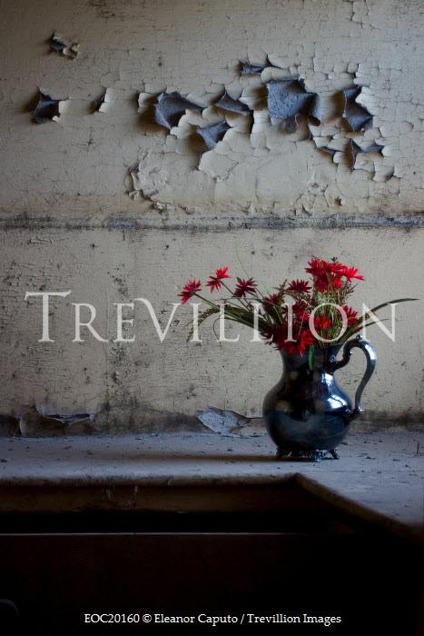 Eleanor Caputo jug with flowers in dilapidated room Flowers/Plants