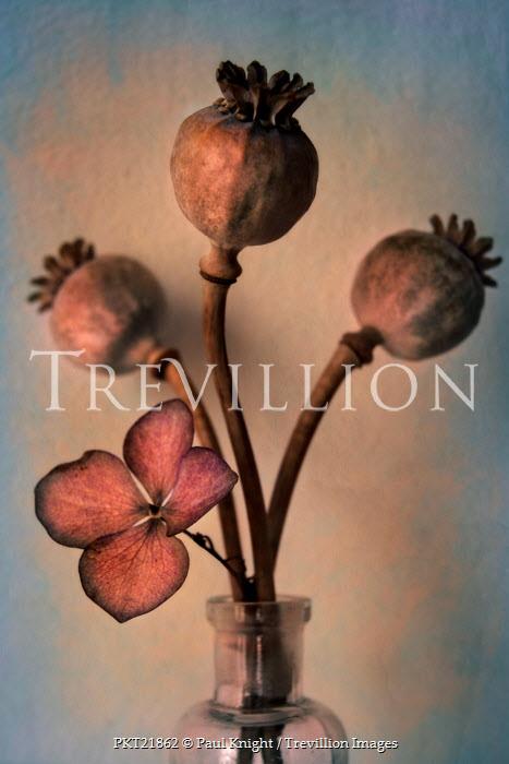 Paul Knight DRIED POPPIES IN BOTTLE Flowers/Plants