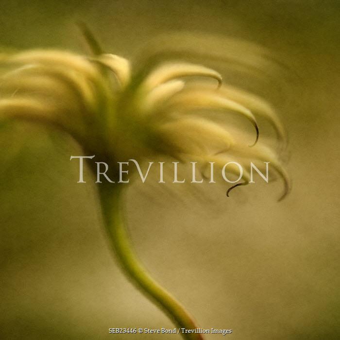 Steve Bond Flower Flowers/Plants