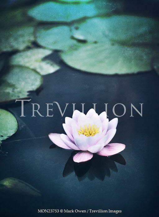 Trevillion Images The Ultimate Creative Stock Photography Mark