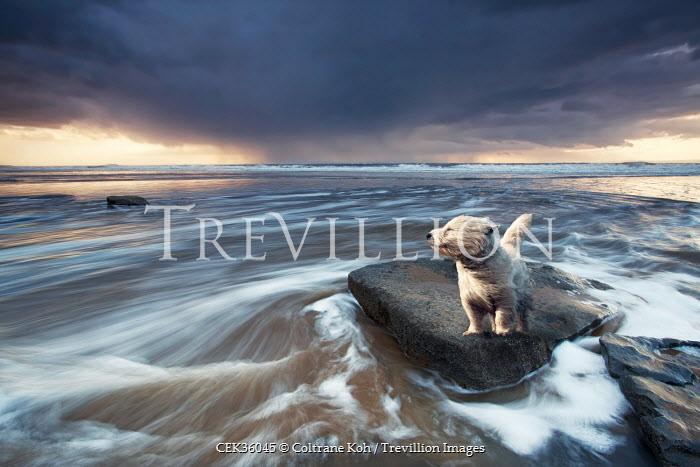 Coltrane Koh DOG BY WINDY OCEAN Animals
