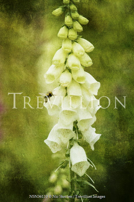 Trevillion Images The Ultimate Creative Stock Photography Nic