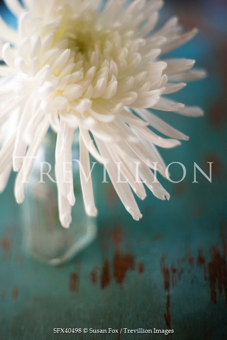 Trevillion Images The Ultimate Creative Stock Photography Susan